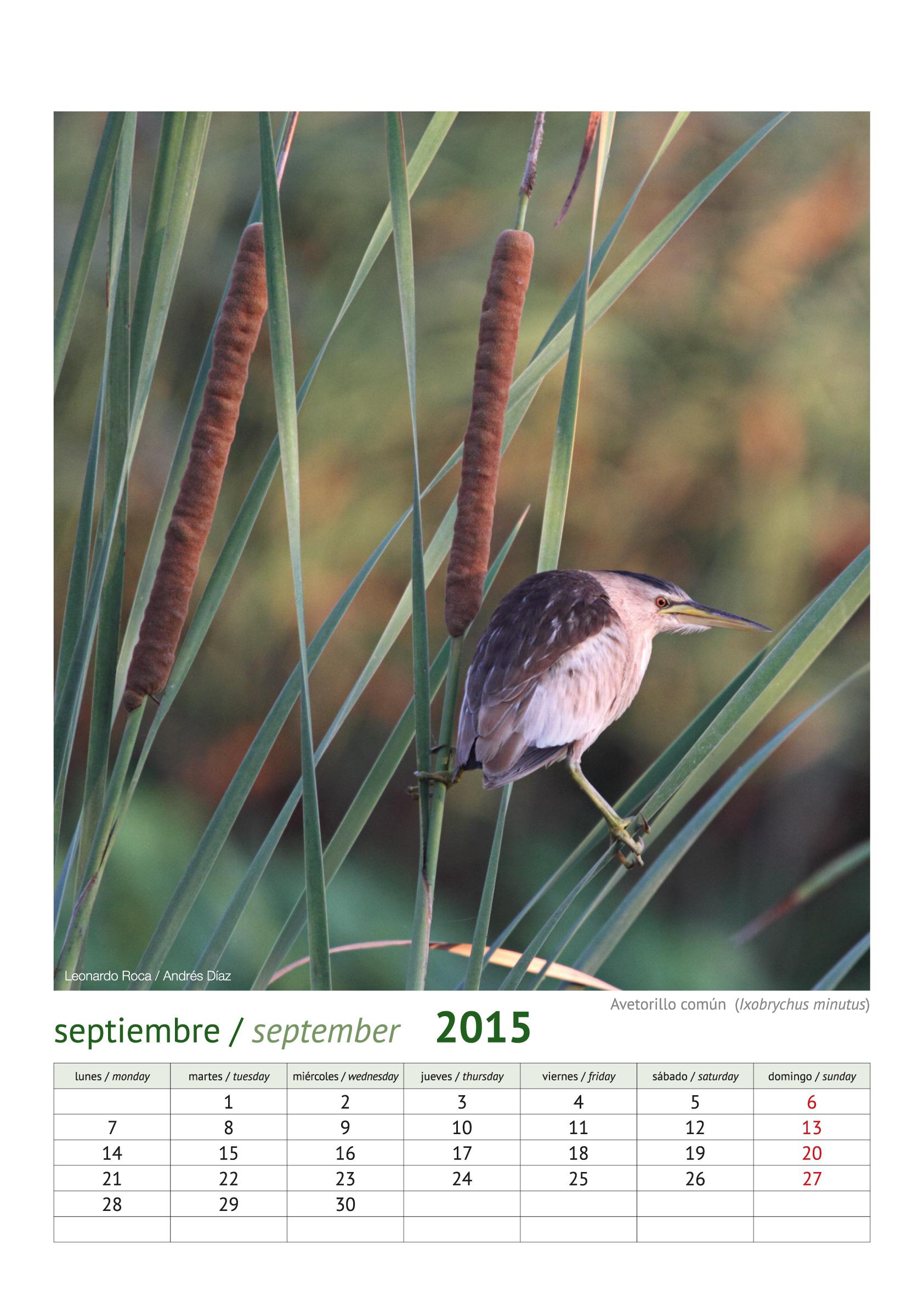 calendario aves_2015_10