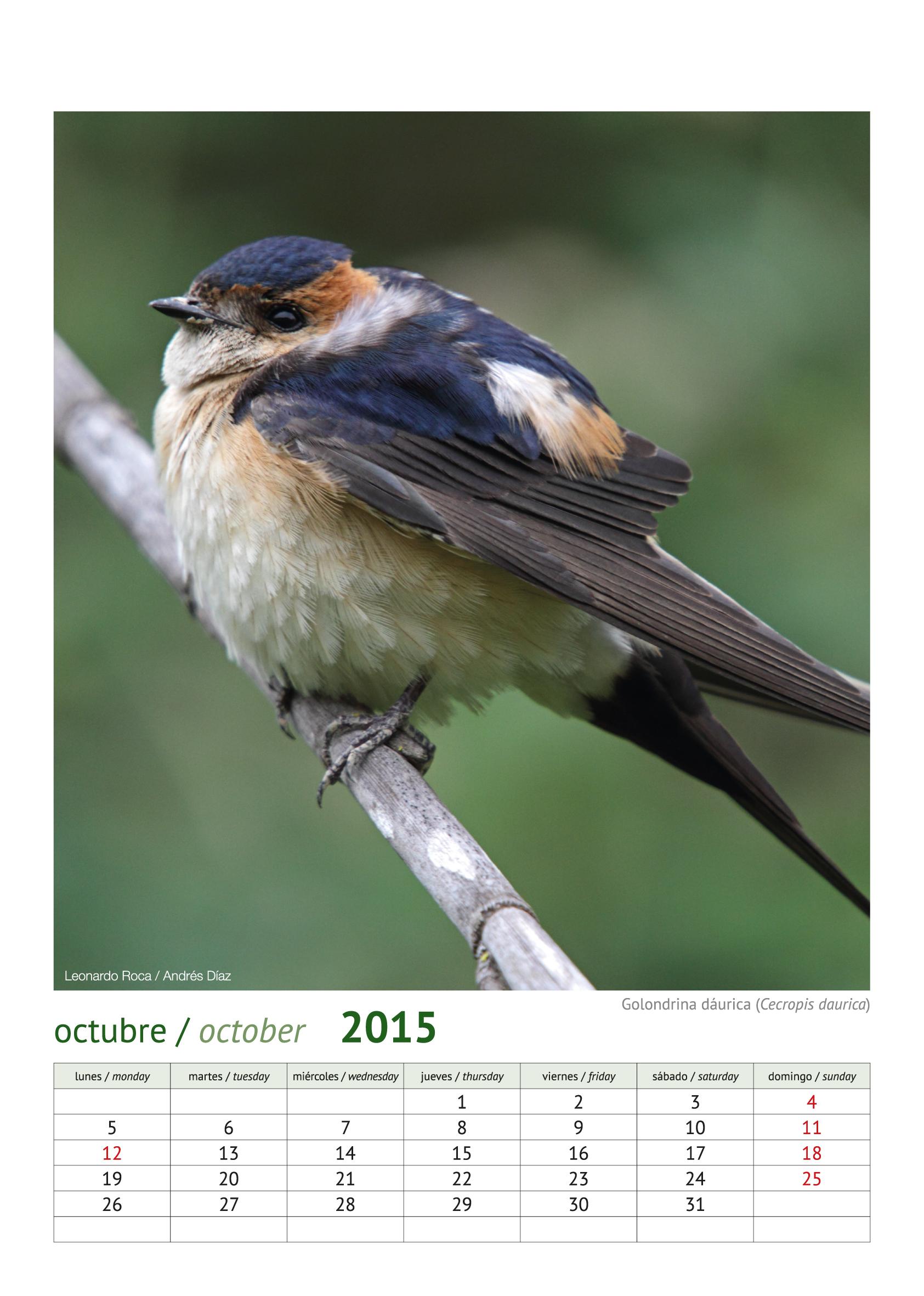 calendario aves_2015_11