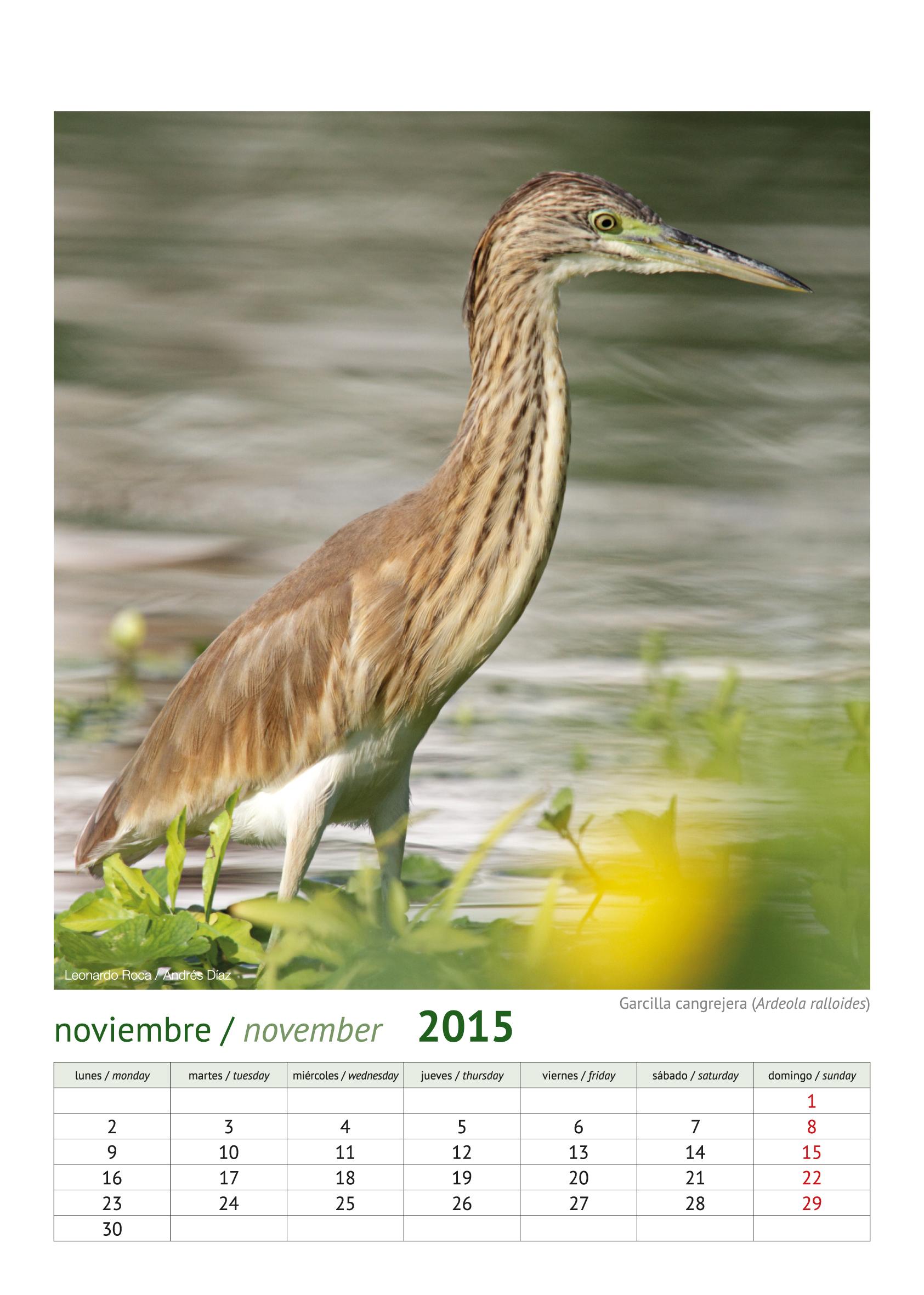 calendario aves_2015_12