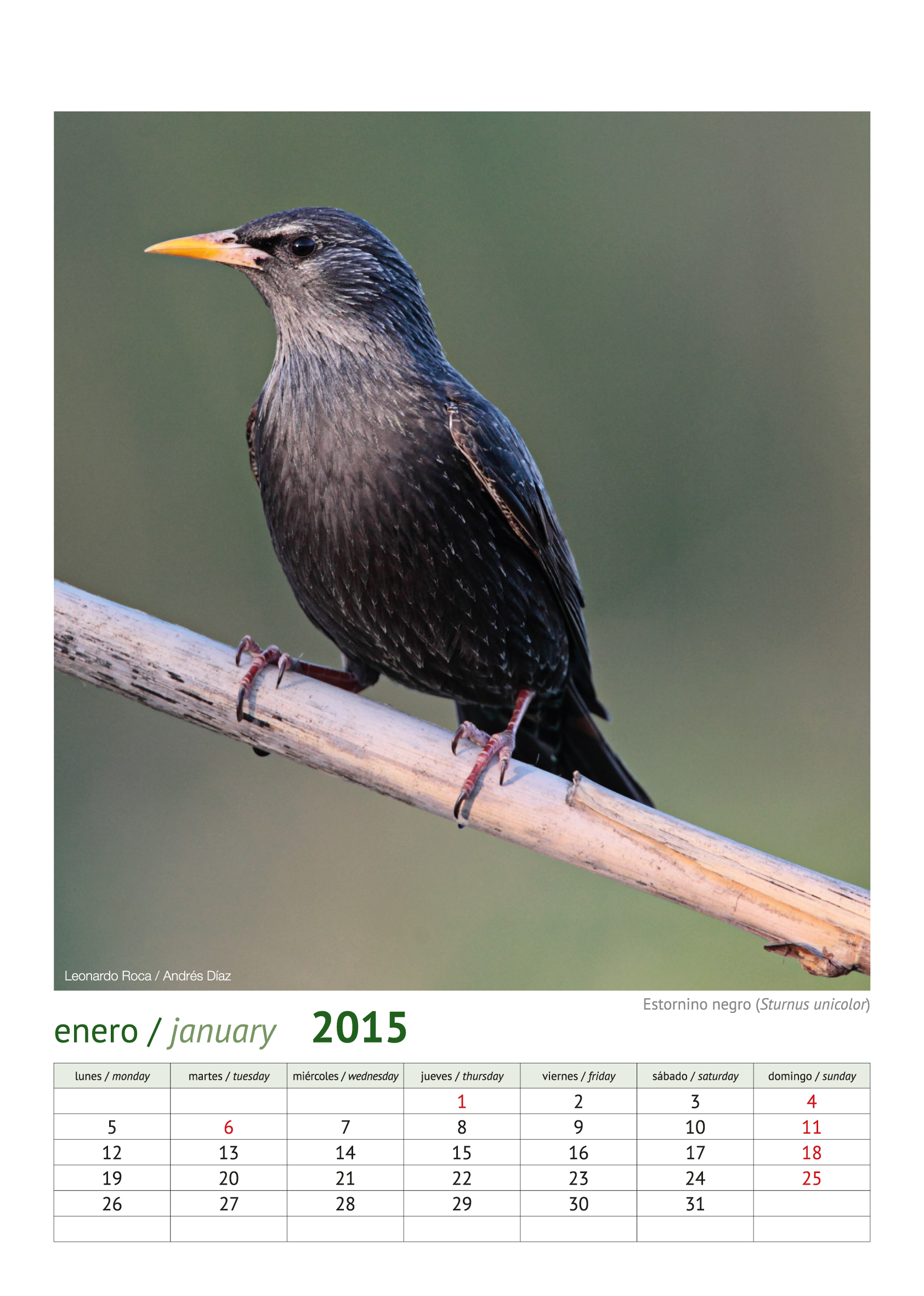calendario aves_2015_2