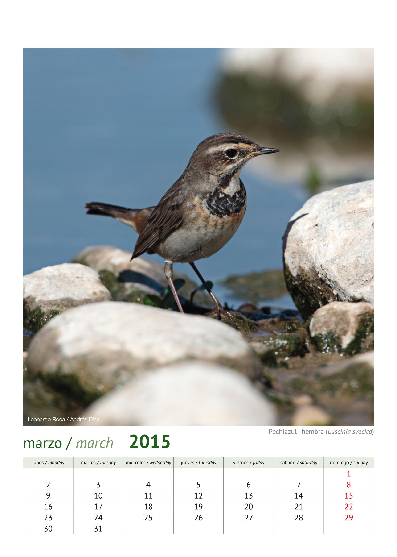 calendario aves_2015_4
