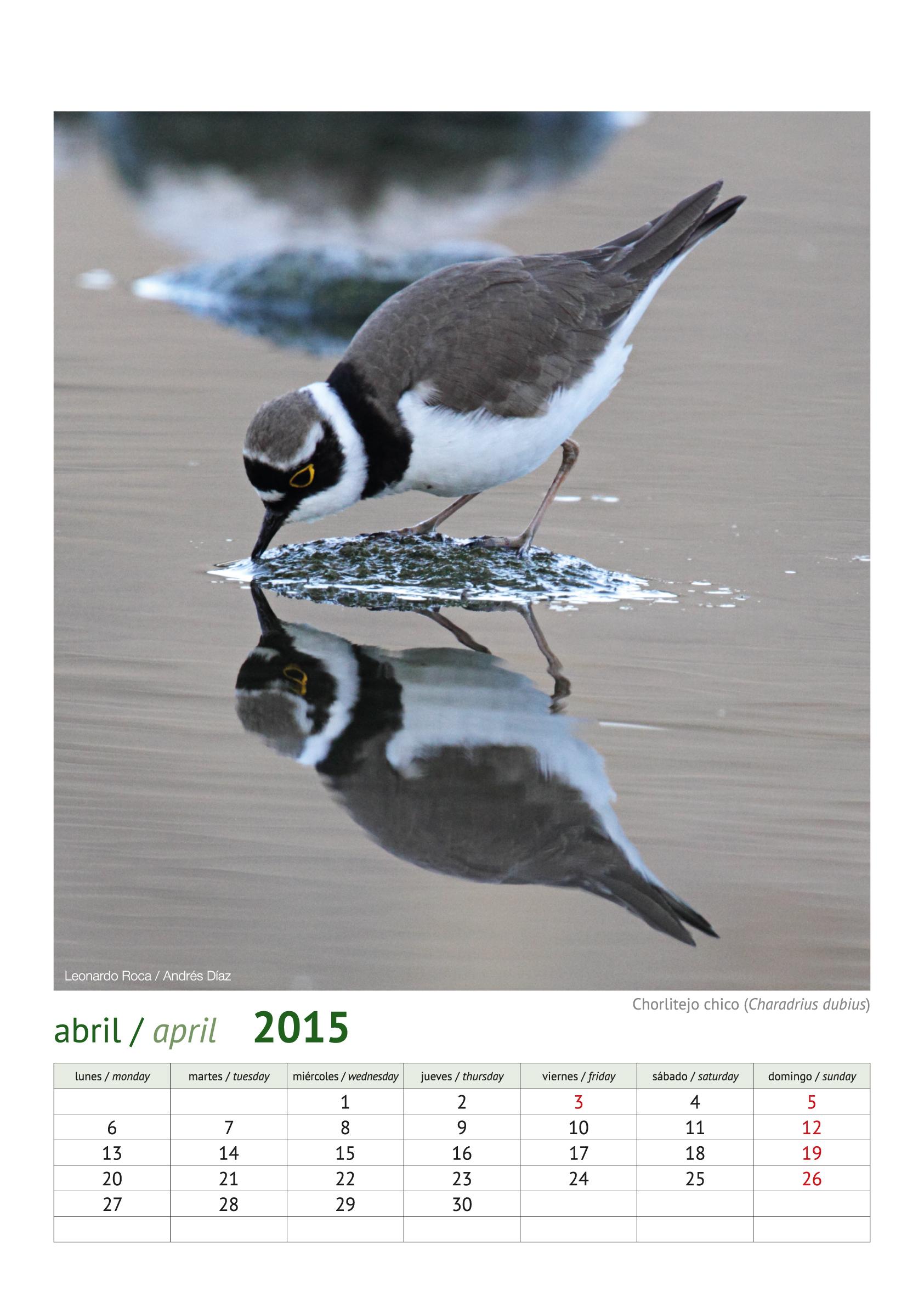 calendario aves_2015_5