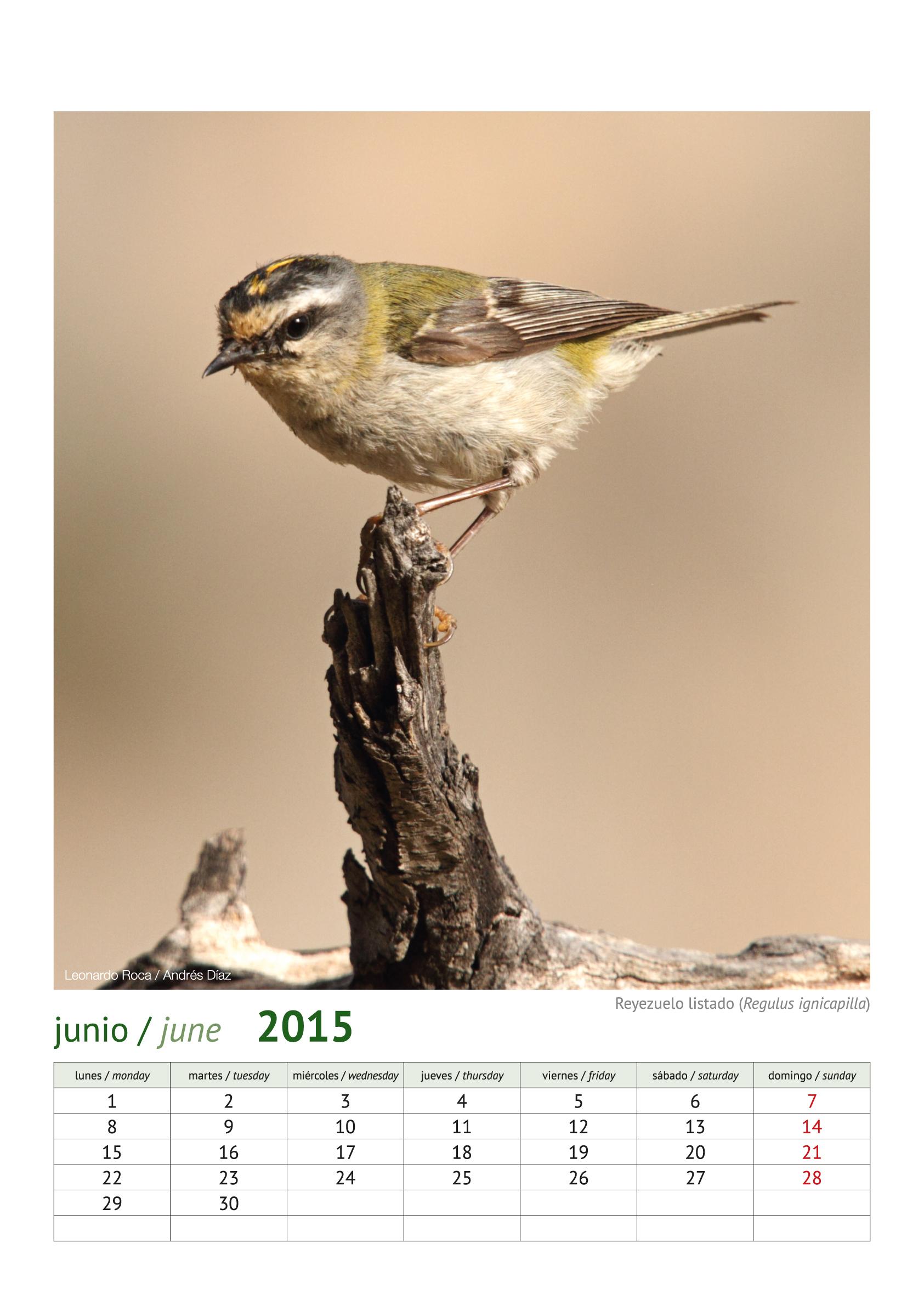 calendario aves_2015_7